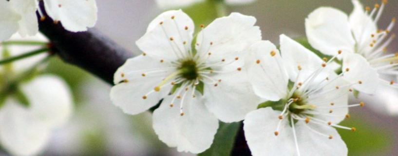 BF1 Kevätpatchi – Mitä on odotettavissa